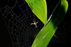 The spider Stock Images