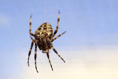Spider Stock Images