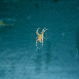 Spider. In his web with blue background Stock Image