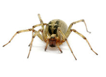 Spider Stock Image