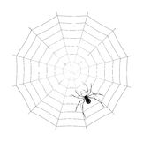 Spider. Vector spider on spider web Stock Images