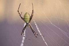 Spider. Stock Photos