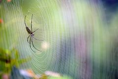 Free Spider Royalty Free Stock Photos - 24776468