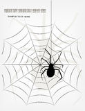 Spider. The pictures show a spider web Royalty Free Stock Image