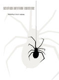 Spider. The pictures show a spider web Royalty Free Stock Images