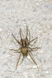 Spider. A spider on the ground royalty free stock images