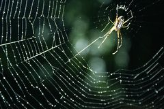 Spider. Webs insect perched on a roof Royalty Free Stock Images