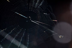 Spider. On web close up Royalty Free Stock Photos