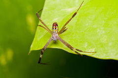 Spider. On leaf in macro mode Stock Photo