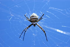 Spider. In my garden Stock Photo