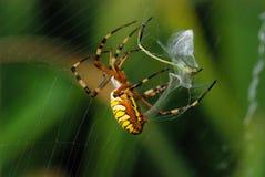 Spider_3 Immagini Stock Libere da Diritti