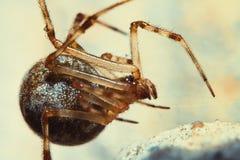 Spider 3 Stock Photos