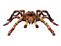 Spider. Computer image, tarantula spider3D isolated background Royalty Free Stock Photography