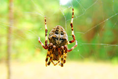 Spider Stock Photos