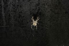 Spider. Closeup of a big spider in its web Stock Photography