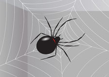 Spider. Royalty Free Stock Photos