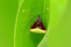 Spider2 Arkivfoto