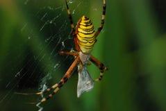 Spider_5 Immagini Stock Libere da Diritti