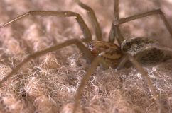 Spider. A large spider sitting on a carpet, captured from side Stock Image