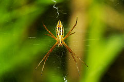 Free Spider Royalty Free Stock Photos - 6030998