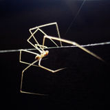 Spider. On black background with backlighting Stock Photo