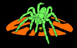 Spider. Giant terrifying spider goliath tarantula, or bird-eating with little yellow spider, - it is vector drawing, all of parts are separated shapes Royalty Free Stock Image