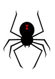 Spider. Illustration of a silhouetted black widow spider Stock Photo