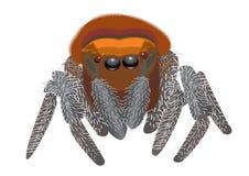 Spider. Big danger spider on white Stock Photos