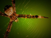 Spider. It's white stand on the green leaf Royalty Free Stock Photo