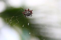 Spider. Having an interesting shape Stock Photo
