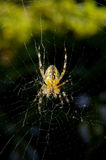Spider. Macro from underneath Stock Photo