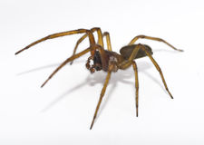 Free Spider Stock Images - 9625534