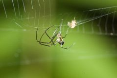 Spider Action Royalty Free Stock Photography