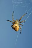 Spider against the blue sky Stock Images
