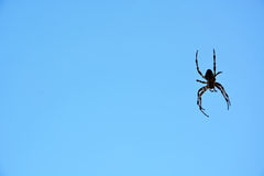 Spider against blue sky Royalty Free Stock Photography