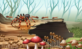 Spider and ants in the woods. Illustration Royalty Free Stock Images