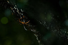 Spider arachnid sits in its lair on black background. Spider arachnid sits in its lair Stock Photos