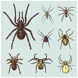 Spider or arachnid species, most dangerous insects in the world, old vintage for halloween or phobia design. hand drawn Stock Photos
