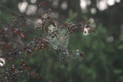 Spider Art. Spider webs glisten in the cherry trees at Cross Creek Park in Washington County Pennsylvania Stock Image
