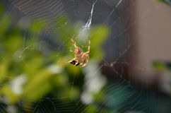 Spider attack Royalty Free Stock Images