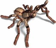 Spider attacks. A black spider attacks you Stock Photos