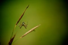 Spider background Royalty Free Stock Photos
