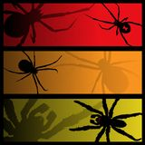 Spider banners Stock Image