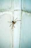 A spider in bartroom. A spider on bartroom cement - ceramic wall Royalty Free Stock Image