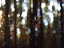 Spider basking in the sun Stock Image