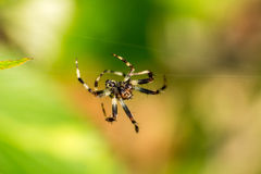 Spider. Beautiful spider on the web Royalty Free Stock Photo