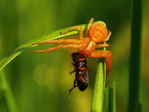 Spider and beetle Stock Photos