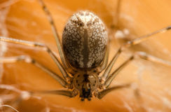 Spider Stock Photo