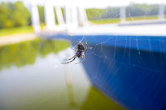 Spider. Royalty Free Stock Photography