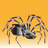 Spider big and bright Royalty Free Stock Images